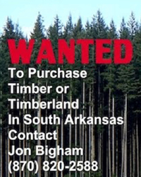 Jon Bigham Timber Buyer
